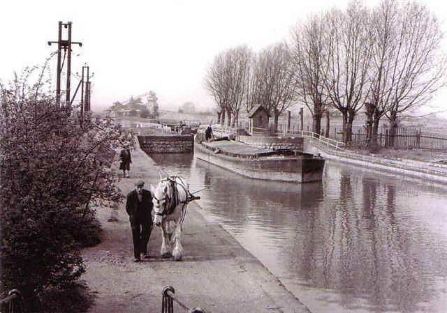 Last drwan horse barge on River Lea 1955